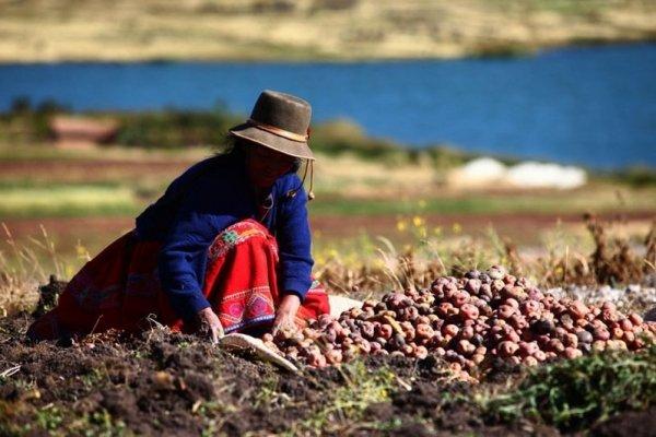 """Gobierno peruano propone seguir """"ejemplo de Chile"""" para potenciar al agro a través de la minería"""
