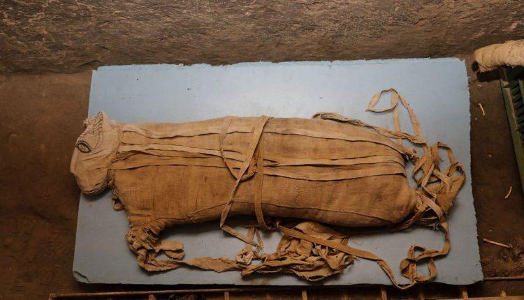 Muy raras momias de leones descubiertas en Egipto