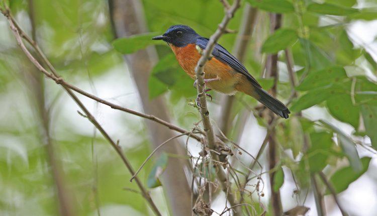 10 nuevas aves descubiertas en el 'mundo perdido'