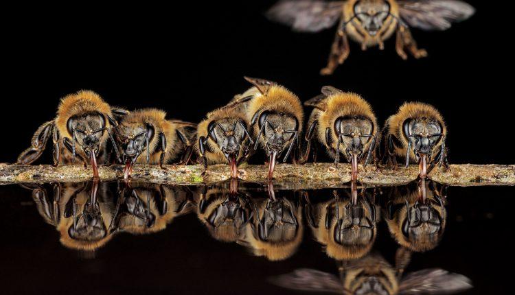 Las fotos del interior de un árbol revelan la vida íntima de las abejas silvestres