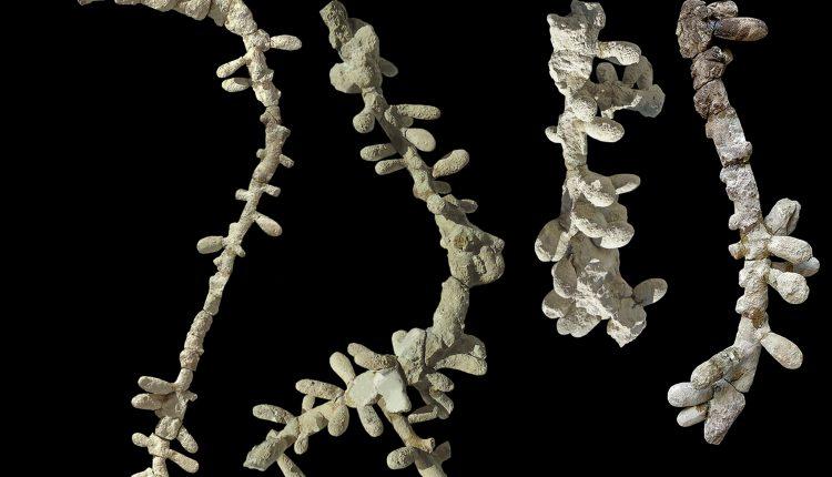 La evidencia más antigua de abejas modernas encontrada en Argentina